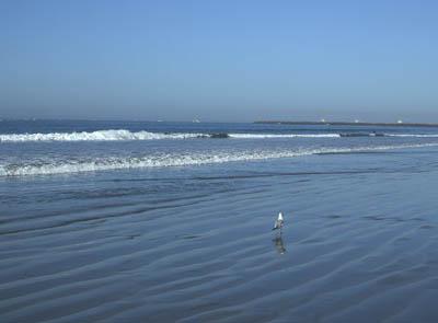 Seal_beach3