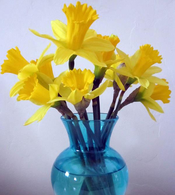 A_daffodills