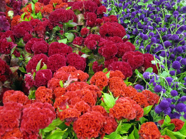 Flower_mart2