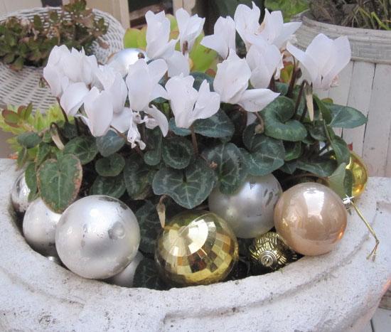 Christmas2010_9