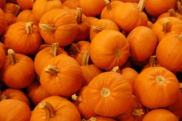 Pumpkins5