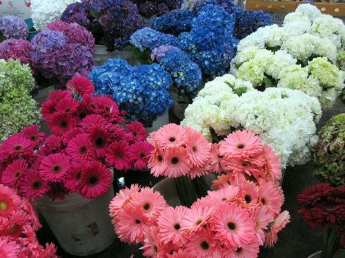 Aaaa_flowers
