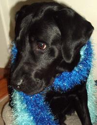Dogscarf_copy