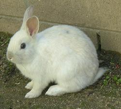 Rabbit2_1